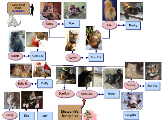 shatouilles family tree avec noms- exercice EO