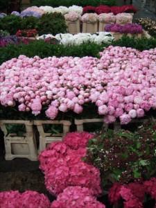 Halles aux fleurs à Rungis