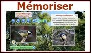 Apprendre le chant des oiseaux