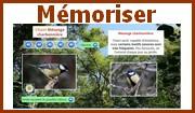 Mémoriser le chant des oiseaux