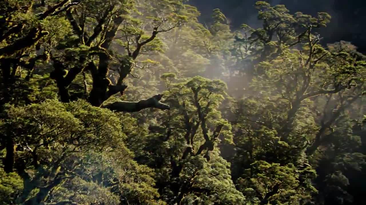 La photosynthèse du végétal, capable de capter l'énergie solaire, est à la base de la vie sur Terre (Source : film Home de Yann Arthus Bertrand)