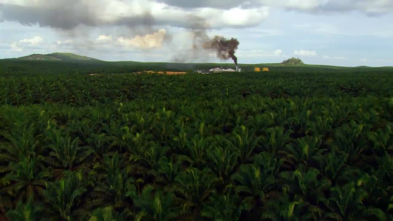 Déstruction de la forêt primaire de Borneo pour produire de l'huile de palme (Source : film Home de Yann Arthus Bertrand)