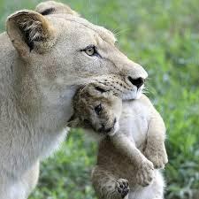 lione