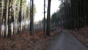 Trekking dans la forêt voisine